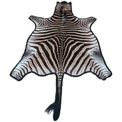 "Superb ""Burchell"" Zebra Hide Rug"