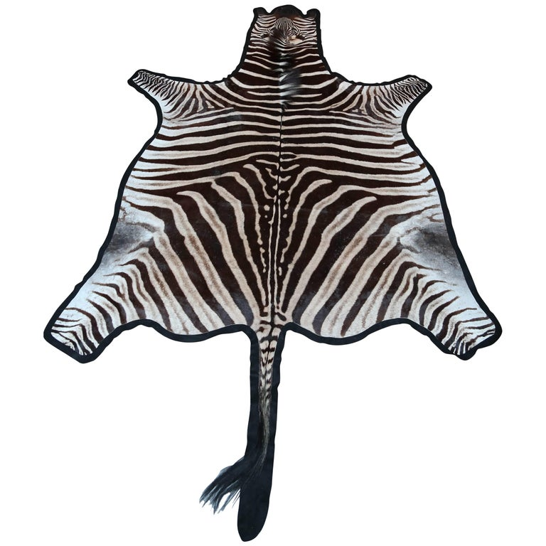 "Superb ""Burchell"" Zebra Hide Rug 1"
