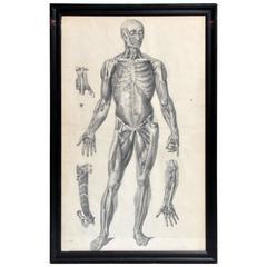 Italian Black and White Medical Print Anterior View