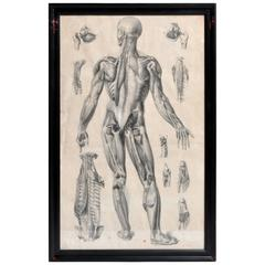 French Black and White Medical Print Posterior View
