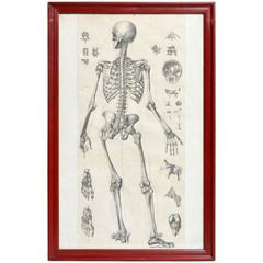 Italian Black and White Medical Print Skeletal Structure