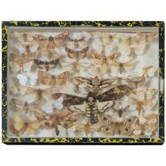 Framed Vintage French Collection of Mounted Moths, circa 1940