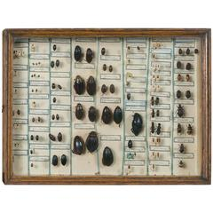 Vintage Insect Collection in Specimen Box from France
