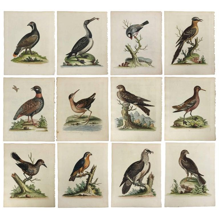 Beautiful Set of 12 Bird Prints by George Edwards, circa 1750