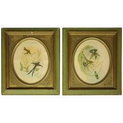 Pair of 19th Century Framed English J. Gould, Bird Study Prints, Hummingbirds