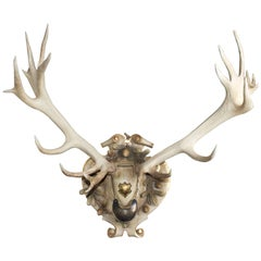 19th Century Habsburg Red Stag Trophy from Eckartsau Castle Austria with Gorget