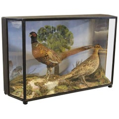 Decorative Glass Case from the 1930s with a Pair of Taxidermy Pheasants.