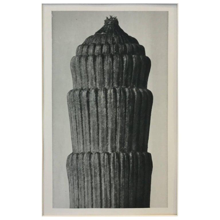 Karl Blossfeldt Photogravure 1st Edition 1928