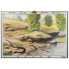 """Antique Swedish School, Teaching Chart, Poster """"Snakes and Lizards"""""""