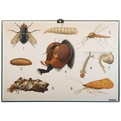 """Antique Swedish School, Teaching Chart, Poster """"Insects"""""""
