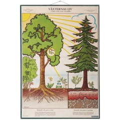 """Antique Swedish School, Teaching Chart, Poster """"the Life of the Plants"""""""
