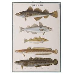 "Antique Swedish School, Teaching Chart, Poster ""Fishes III"""