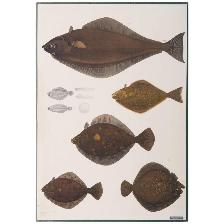 """Antique Swedish School, Teaching Chart, Poster """"Fishes"""""""
