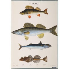 "Antique Swedish School, Teaching Chart, Poster ""Fishes I"""