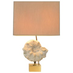 Mounted Ammonite Belgian Specimen Lamp with Brass Base and Armature