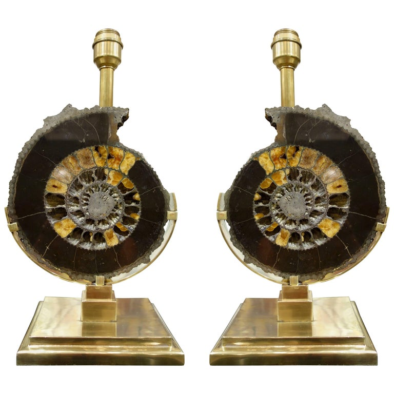 Pair of Dark Charcoal Gray and Gold Polished Ammonite Table Lamps on Brass Bases 1
