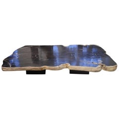 Andrianna Shamaris Petrified Wood Coffee Table