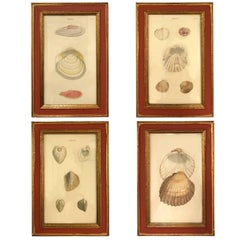 19th Century, Set of Four Shell Engravings