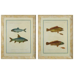 Pair of Hand-Coloured Engravings of Fish from H.N. Zoologie Poissons