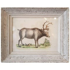 Greenland Buck by George Edwards, Hand-Colored Antique Bird Print, circa 1743
