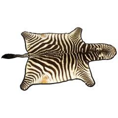 Vintage Taxidermy Zebra Skin Rug with Felt Backing, circa 1970