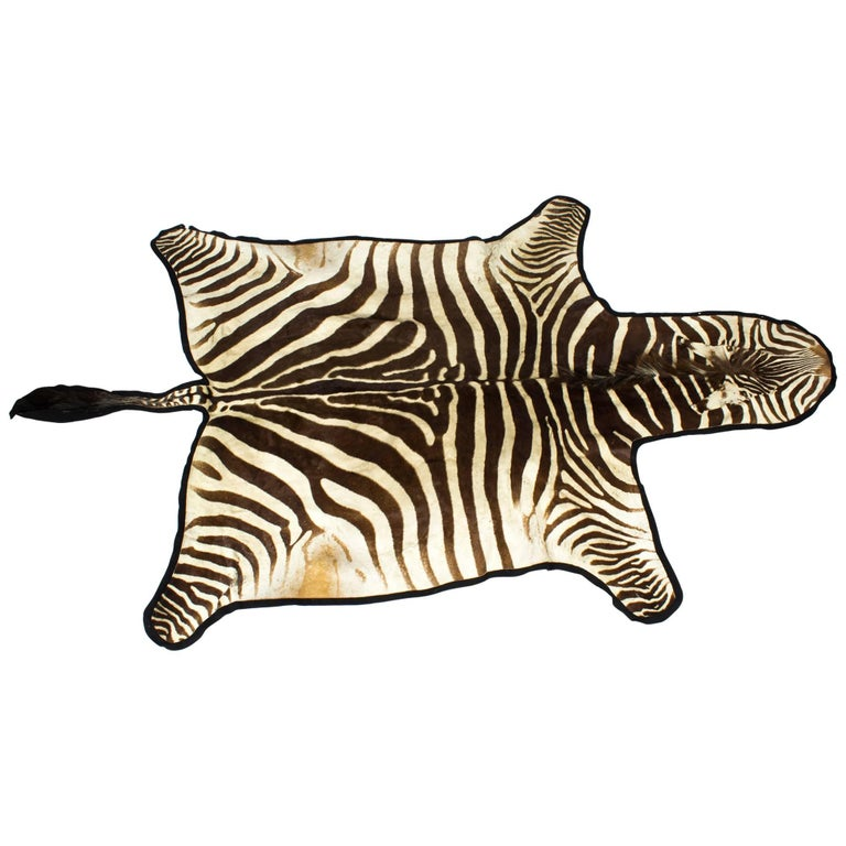 Vintage Taxidermy Zebra Skin Rug with Felt Backing, circa 1970 For Sale