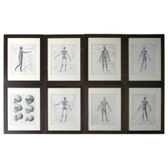 Group of Eight Framed Early 19th Century Anatomical Plate, circa 1802-1808