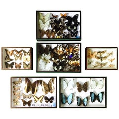 Set of Six Butterfly Collection Boxes from Paris, circa 1960