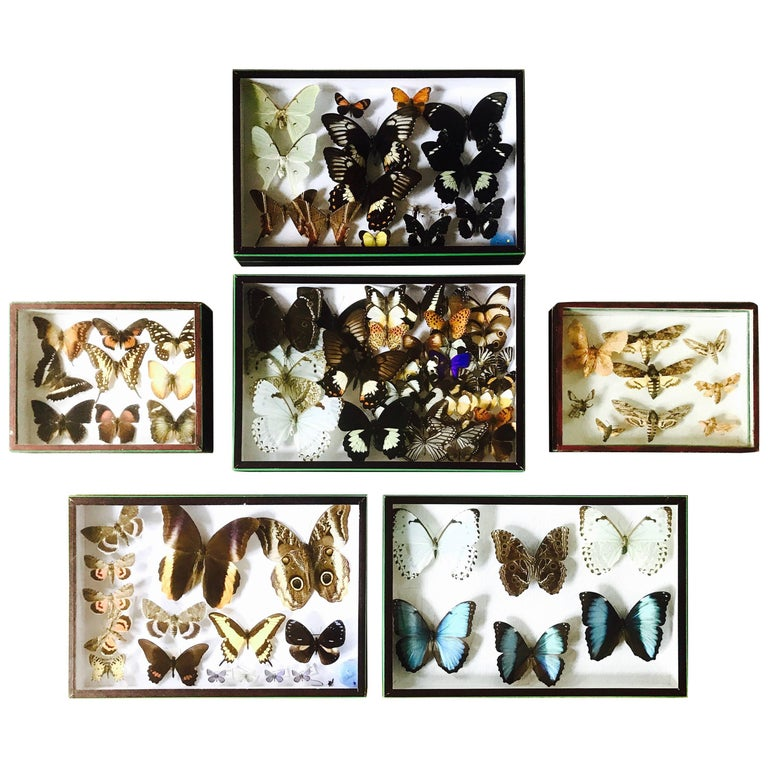 Set of Six Butterfly Collection Boxes from Paris, circa 1960 For Sale