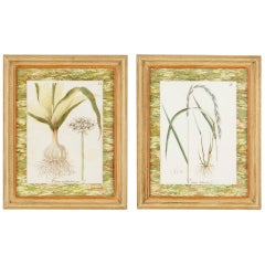 Pair of Hand Colored Botanical Engravings in Painted Wood Frames, France, 1940s