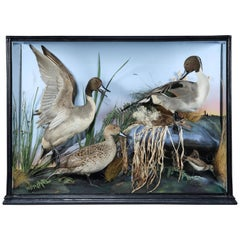 Edwardian Taxidermy Case of Pintails and Sandpipers