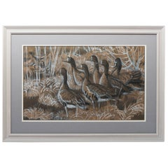 Charles Frederick Tunnicliffe drawing of Canadian geese, England, circa 1970