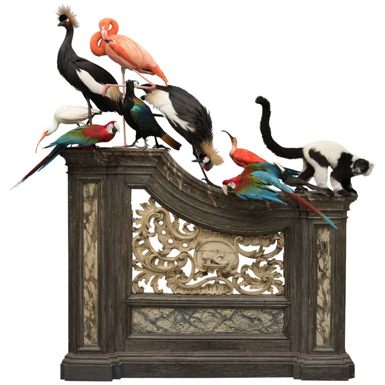 Fine Taxidermy Tableaux from Exhibition Tier at Moa by Sinke & Van Tongeren