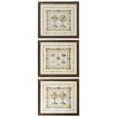 Three Framed Hand-Colored Spherical Engravings by Louis Charles Desnos, 1766