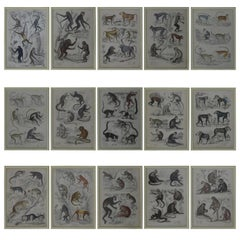 Set of 15 Antique Monkey Prints in Faux Ivory Frames, 1830s