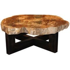 Large Petrified Wood Slab Coffee Table on Steel Mount