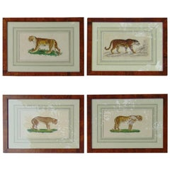 Four Framed Early 19th Century Engravings of Lions and Tigers
