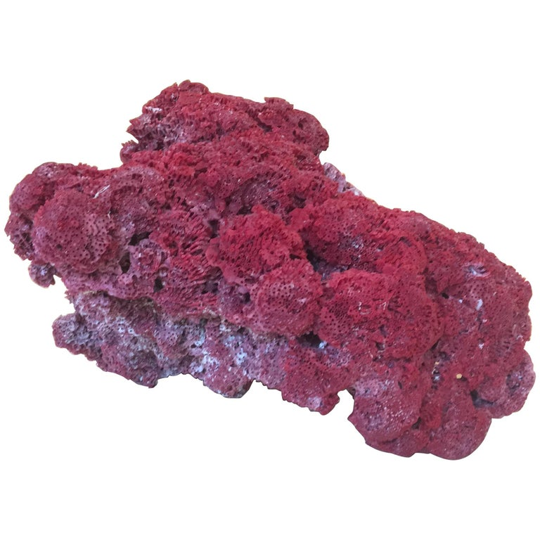 Large Red Coral Specimen For Sale