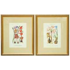 Pair of Botanical Print Plates Flora of South Africa, 1913