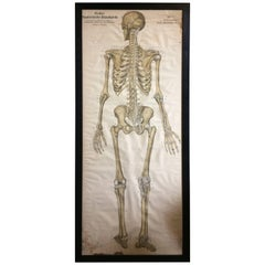Frohse Anatomical Chart