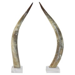 Pair of Texas Long Horns on Lucite Bases