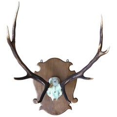 Pair of Large Mounted Deer Antlers