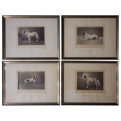 Silver Prints from 1870 Portrait of Dog Exposition Canine Des Champs Elysees