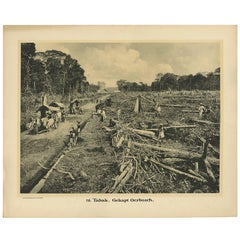 Photographic Plate Illustrating Felling Timber by Kleynenberg, 1910