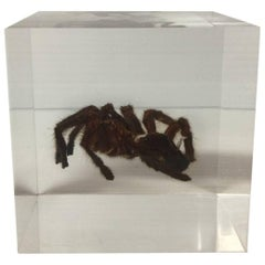 Tarantula Spider in Lucite Cube Paperweight