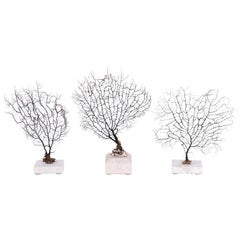 Group of Three Small Black Sea Fans, Priced Individually