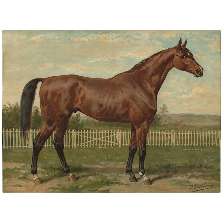 Antique Horse Print of an English Thoroughbred by O. Eerelman, 1898 For Sale
