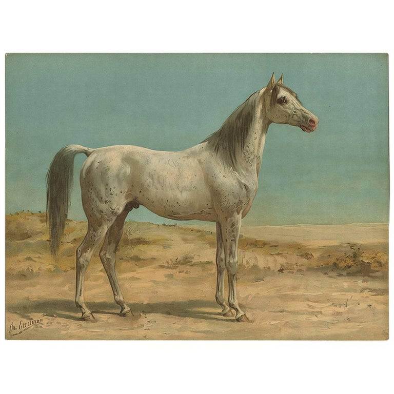 Antique Horse Print Of An Arabian Horse By O Eerelman 1898 For