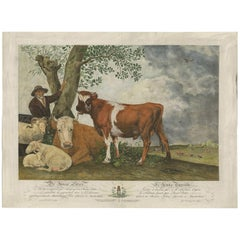 Antique Print of a Bull-Calf, Made After the Painting of Paulus Potter