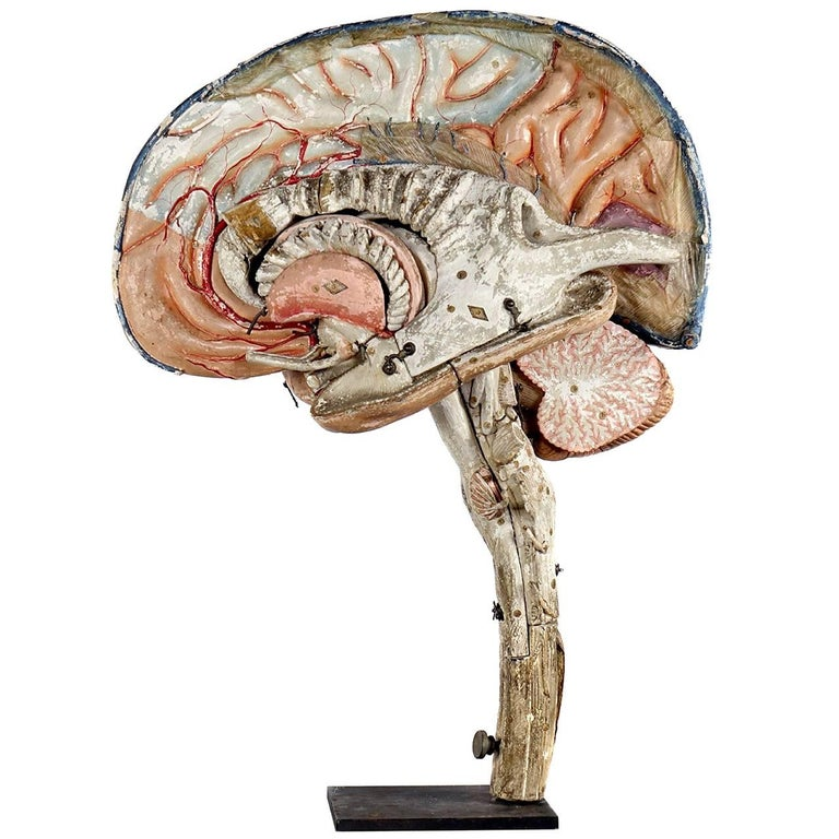 Large 19th Century Dr. Auzoux Paper Mache Model of Brain